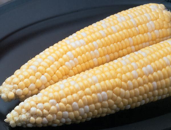 Ambrosia Sweet Corn - Caudill Seed Company