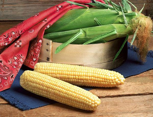 Aspire (Attribute II) Sweet Corn - Caudill Seed Company