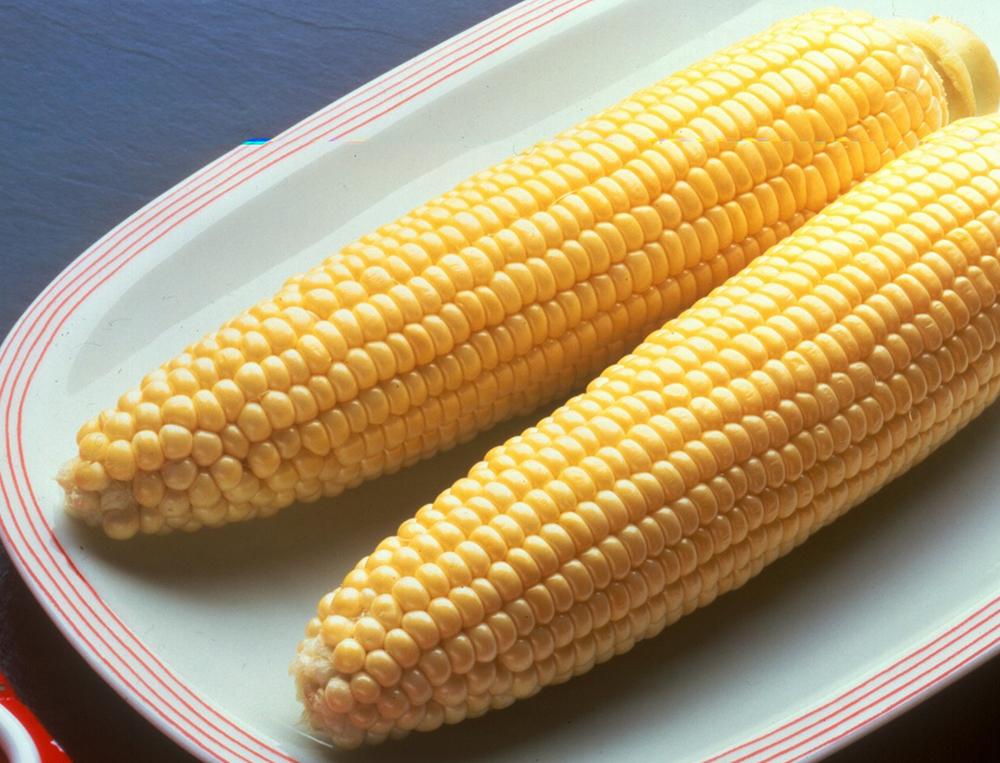 Bodacious Sweet Corn Seed - Caudill Seed Company