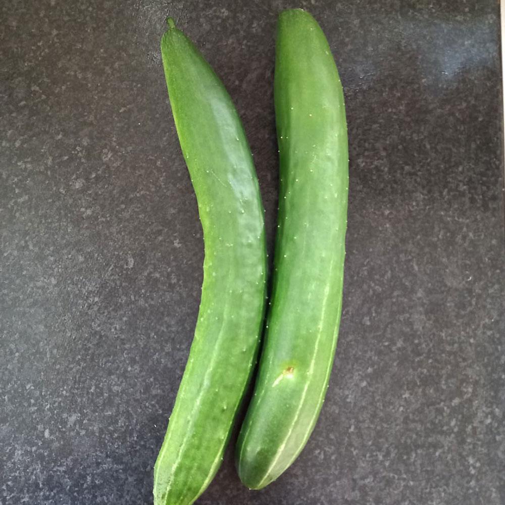 Burpless Hybrid Cucumber Seed - Caudill Seed Company