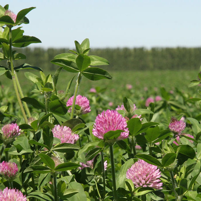 Freedom Premium Red Clover Seed - Caudill Seed Company
