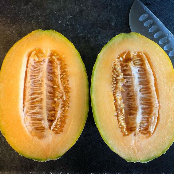 Hales Best Jumbo Cantaloupe Seed - Caudill Seed Company