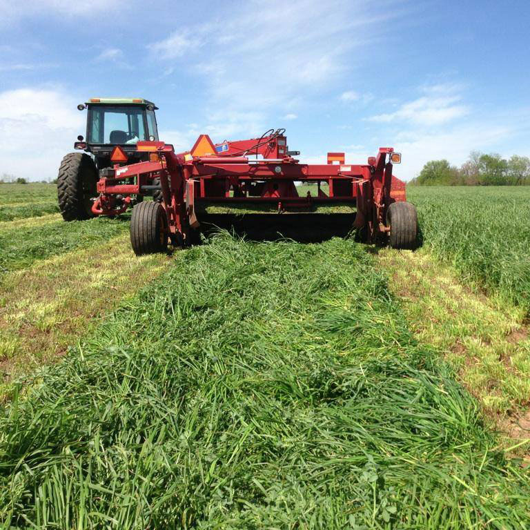 HLR Orchardgrass Seed - Caudill Seed Company