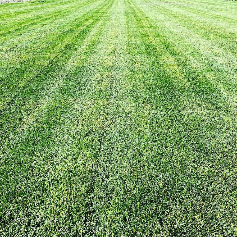 Indy General Purpose Grass Seed - Caudill Seed Company