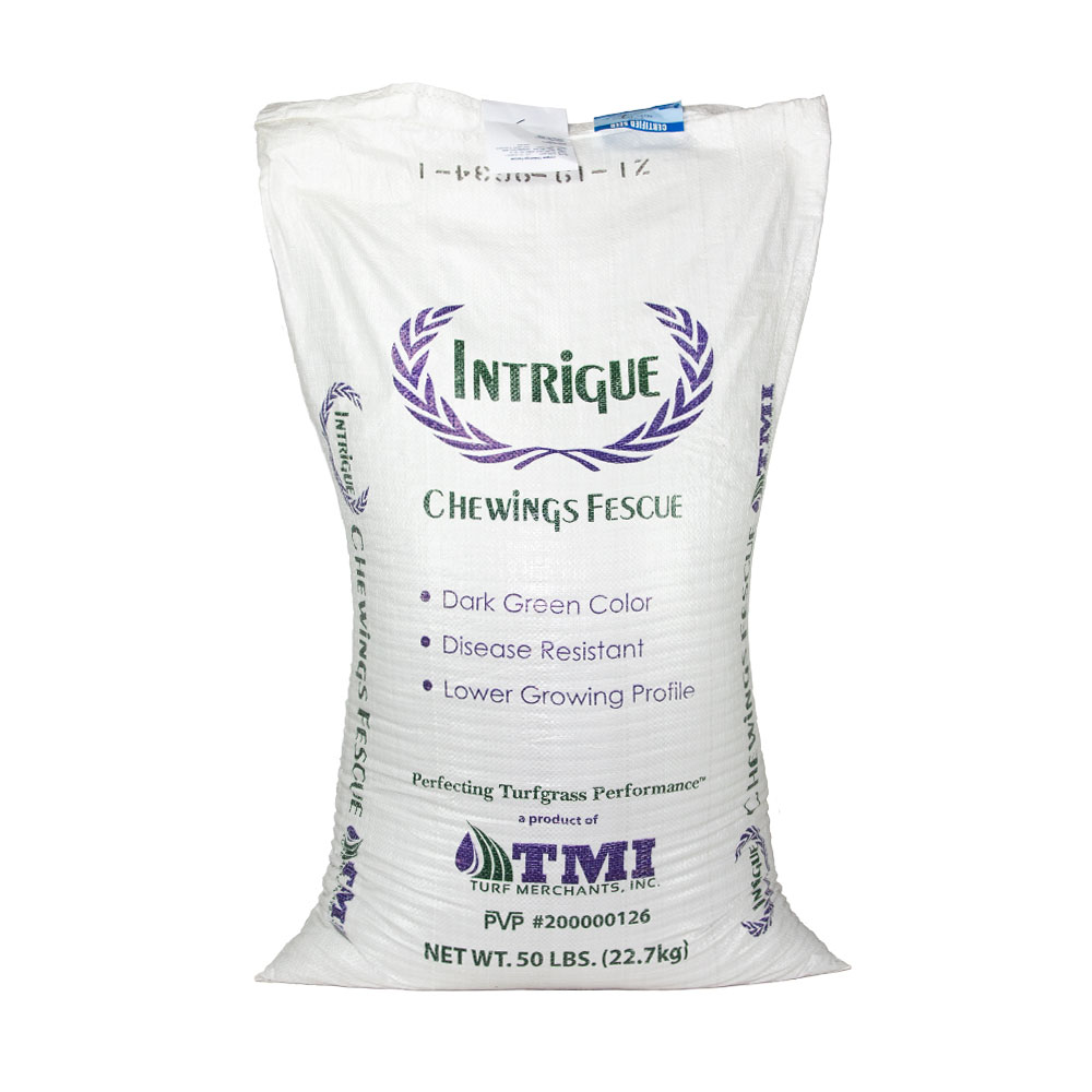 Intrigue Chewings Fescue Grass Seed