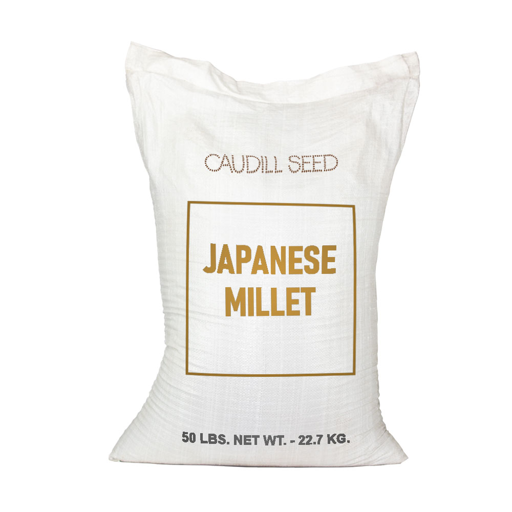 Japanese Millet seed  - Caudill Seed Company