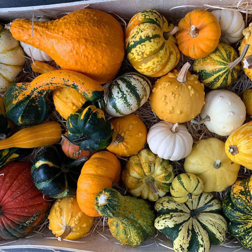Small/Large Mixed Gourd Seed - Caudill Seed Company