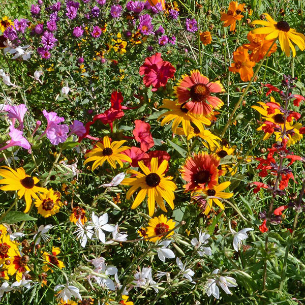 Southeast Wildflower Seed Mixture  - Caudill Seed Company