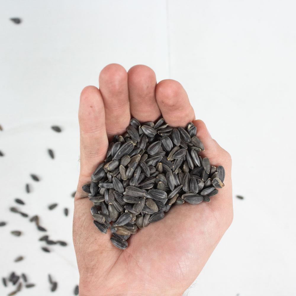 Sunflower Seed for Bird Feeding - Wholesale - Bulk - Caudill Seed Company